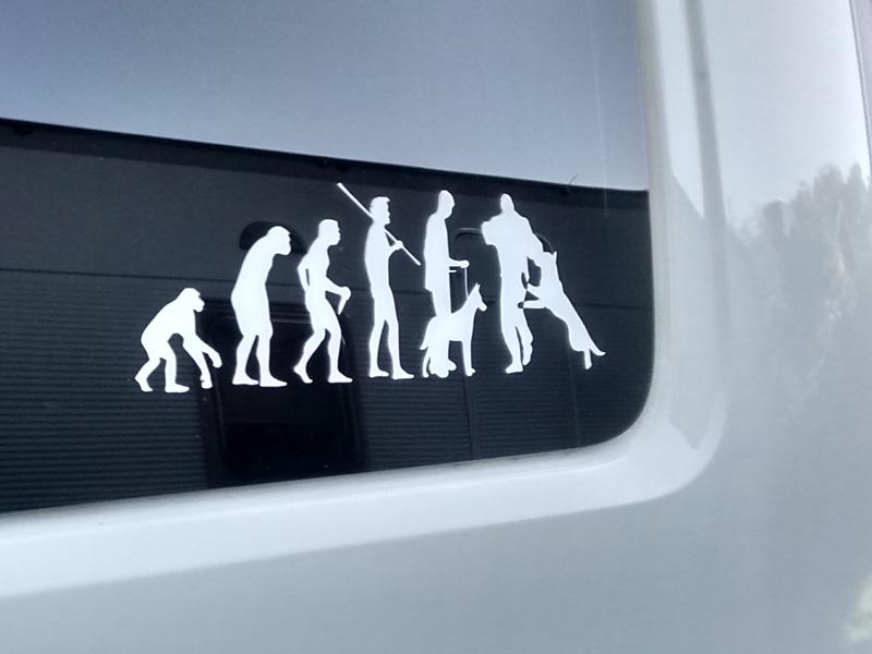 В честь любимых овчарок - наклейка на автомобиль.